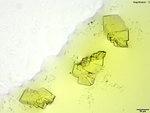 2-EMC in 5% Aqueous HAuCl₄ by Monica Joshi