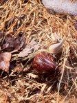 Skunk Cabbage (7), Gordon Natural Area