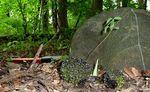 Skunk Cabbage (9), Gordon Natural Area
