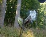 Milkweed seeds, Gordon Natural Area (3)