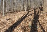 Tree Shadows, Gordon Natural Area