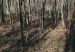 Deer Exclosure at Old Farm Field - non-native plants removed