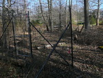 Deer Exclosure at Floodplain - non-native plants removed