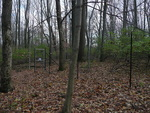 Deer Exclosure at Big Woods - non-native plants not removed (1)