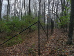 Deer Exclosure at Big Woods - non-native plants not removed (2)
