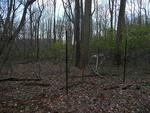Deer Exclosure at Big Woods - non-native plants removed