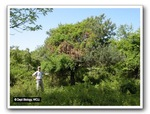 Non-native Plant Invasion, Gordon Natural Area by Gerard Hertel