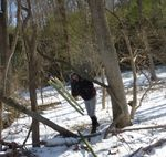 Bamboo Removal, Lucas Vancovich's Eagle Scout Project, Gordon Natural Area (1) by Gerard Hertel