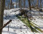 Bamboo Removal, Lucas Vancovich's Eagle Scout Project, Gordon Natural Area (2)