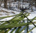 Bamboo Removal, Lucas Vancovich's Eagle Scout Project, Gordon Natural Area (4)