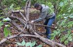 Friars Society Removes Amur Honeysuckle & Privet, Gordon Natural Area (4)