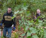 Friars Society Removes Amur Honeysuckle & Privet, Gordon Natural Area (5)