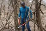 Removing Non-native Vines from the Gordon Natural Area (6)