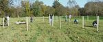 East Bradford Riparian Forest Planting (4)