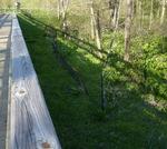 East Goshen Township Forest Restoration Project 2014 (6)