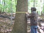 Carbon Stock Pilot Study; GEO 402/585 Field Methods; Dr. Joy Fritschle, instructor; Measuring tree circumference.