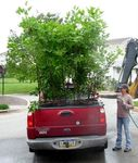 Brandywine Valley Association donation of 40 trees for Gordon Natural Area