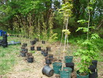 New Native Trees for the Gordon Natural Area