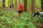 Friars' Society Pulling Invasive Jetbead and Planting Native Trees, Gordon Natural Area (7)