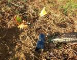 Tree Planting with Brandywine Conservancy, October 2014, Gordon Natural Area (21)