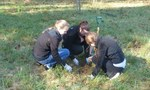 Tree Planting with Brandywine Conservancy, October 2014, Gordon Natural Area (32)