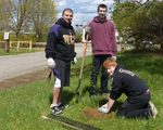 Tree Campus USA/Arbor Day 2015 tree planting, Gordon Natural Area (12)