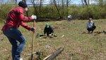 Tree Campus USA/Arbor Day 2015 tree planting, Gordon Natural Area (14)