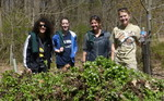 7th Annual Garlic Mustard Pull, Gordon Natural Area (2)