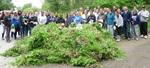 Garlic Mustard Pull 2012 (4)