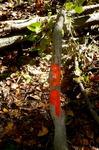 Tree Fall Study, Gordon Natural Area, Tree #39