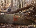 Tree Fall Study, Gordon Natural Area, Tree #12