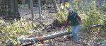 Tree Fall Study, Gordon Natural Area, Tree #14