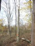 Tree Fall Study, Gordon Natural Area, Tree #18