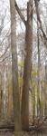 Tree Fall Study, Gordon Natural Area, Tree #16
