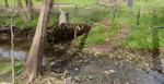 Tree fall at Plum Run (1), Gordon Natural Area