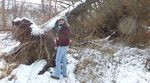 Tree Fall, December 2013, Gordon Natural Area (1)
