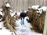 Tree Fall, December 2013, Gordon Natural Area (2)