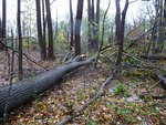 Superstorm Sandy Damage 2012, Gordon Natural Area (3) by Gerard Hertel