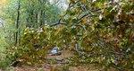 Superstorm Sandy Damage 2012, Gordon Natural Area (5) by Gerard Hertel