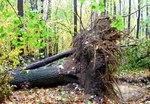 Superstorm Sandy Damage 2012, Gordon Natural Area (6) by Gerard Hertel