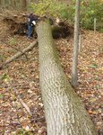 Superstorm Sandy Damage 2012, Gordon Natural Area (12)