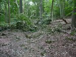 Hurricane Irene Damage 2011, Gordon Natural Area (7) by Gerard Hertel