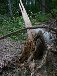 Hurricane Irene Damage 2011, Gordon Natural Area (9) by Gerard Hertel