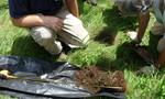 Soil Sampling, Gordon Natural Area (14)