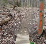 Unauthorized Bike Trail in the Gordon Natural Area