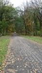 Road through the Gordon Natural Area (4)