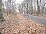 Road through the Gordon Natural Area (6)