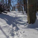 Winter in the Gordon Natural Area (7)