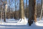 Winter in the Gordon Natural Area (11)