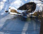 Winter in the Gordon Natural Area (13)